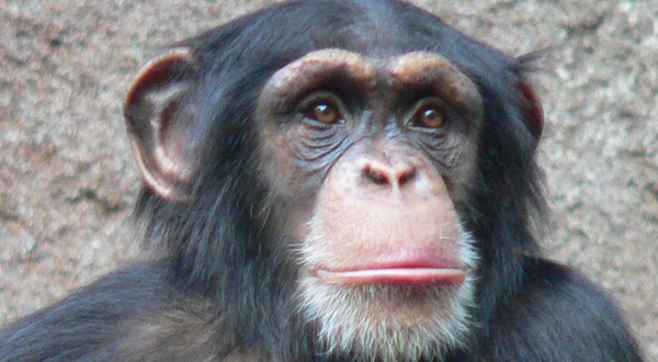 Monkey Business: Peanuts Rate as a Top Antioxidant