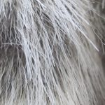 Stress Really Can Turn Your Hair White, Mouse Experiment Suggests