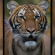 Tiger tests positive for COVID-19 at New York City zoo, first case of its kind in the U.S.