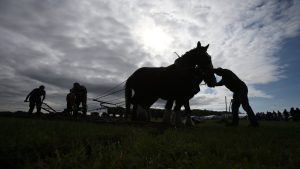 Covid-19 sees cancellation of Ploughing Championships