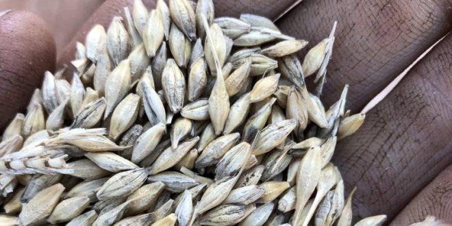 Barley growers brace for China tariff hit