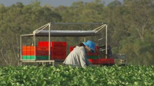 Public health alert issued after fruit picker with COVID-19 flies from Melbourne into Queensland